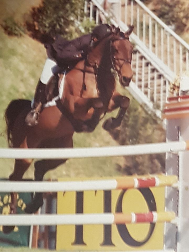 Barry Bug - International Showjumper