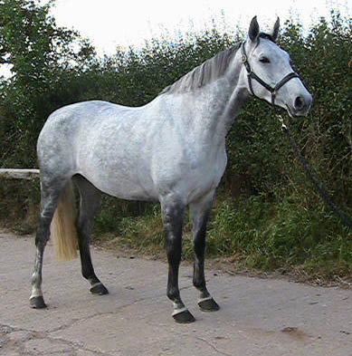 Eighteen - Sport Horse Mare