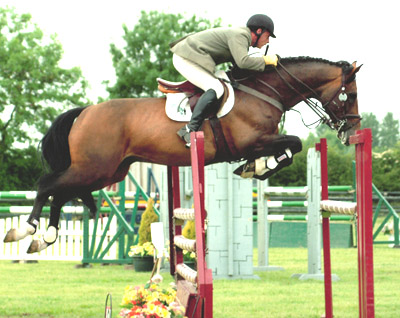 French Show Jumping Stallions