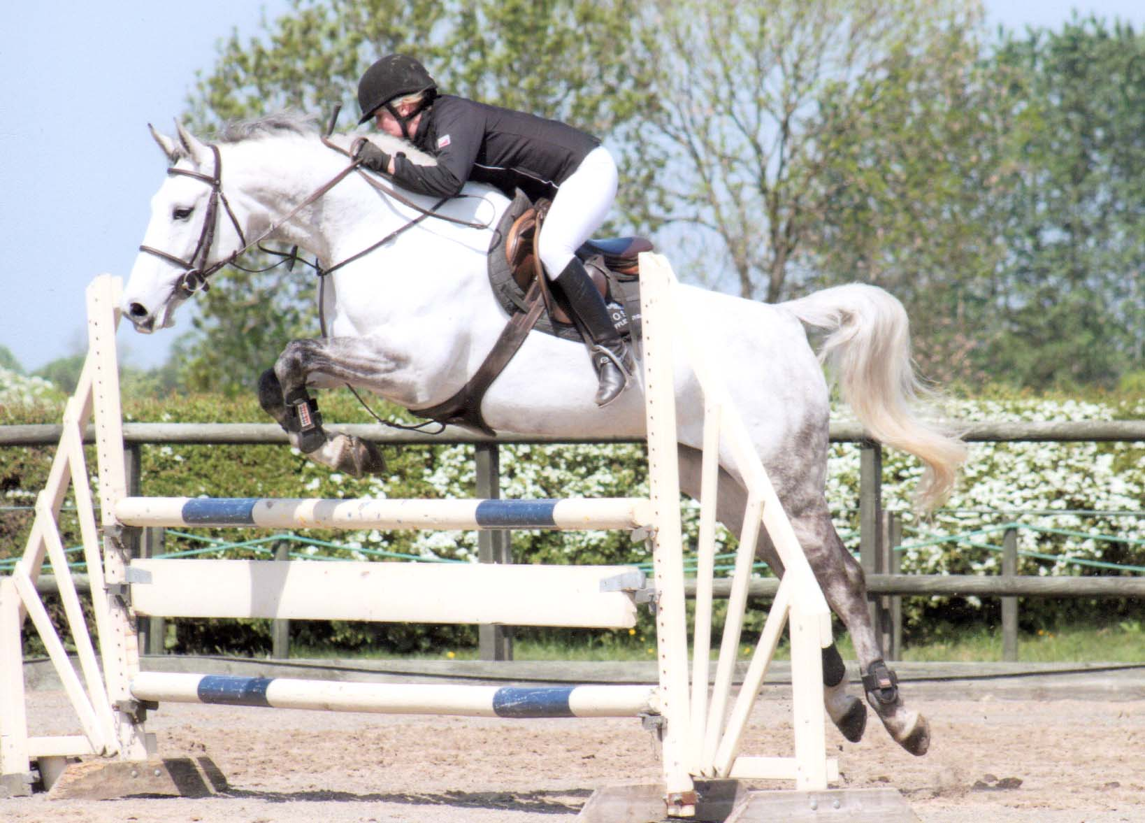 Eighteen - Sport Horse Sold