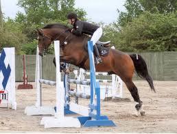Sport Horse Breeding