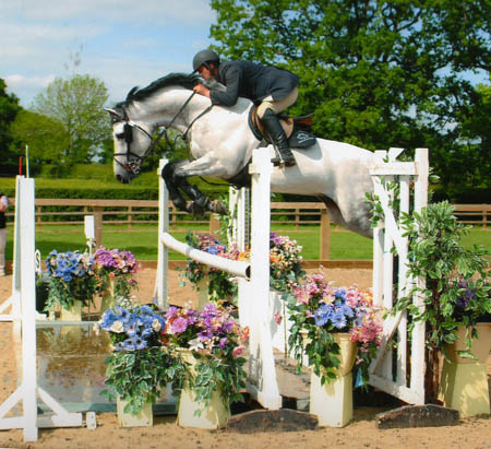 Showjumping Stallions At Stud