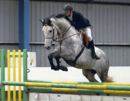 Crocodile Dundy Z - Placed in showjumping championship
