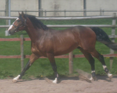 Young Competition Horse