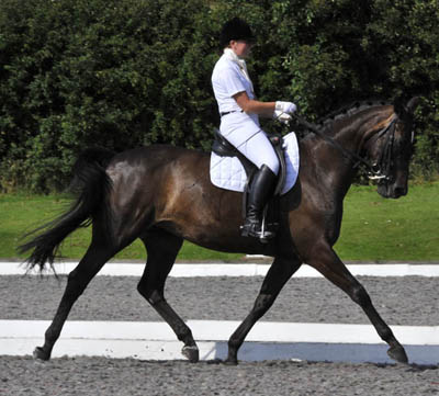 Dressage Horses For Sale With our experienced staff we have the capability