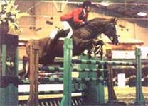 Showjumping Stallion At Stud