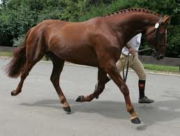 Performance Horses For Sale