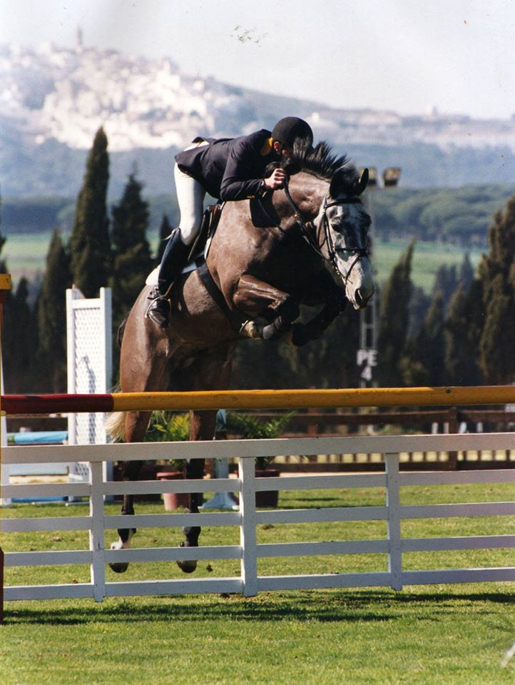 Lugano I - International Showjumper