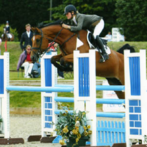 Showjumping Mare For Sale