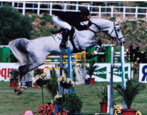 Arturo 8 - Holstein Showjumping Stallion