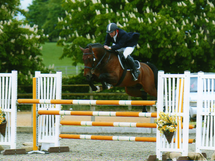 Showjumper - Robert Bevis