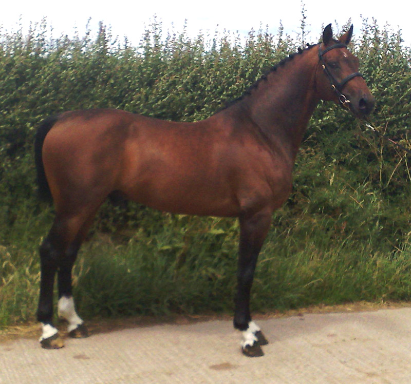 Arturo9 - Home Bred Stallion