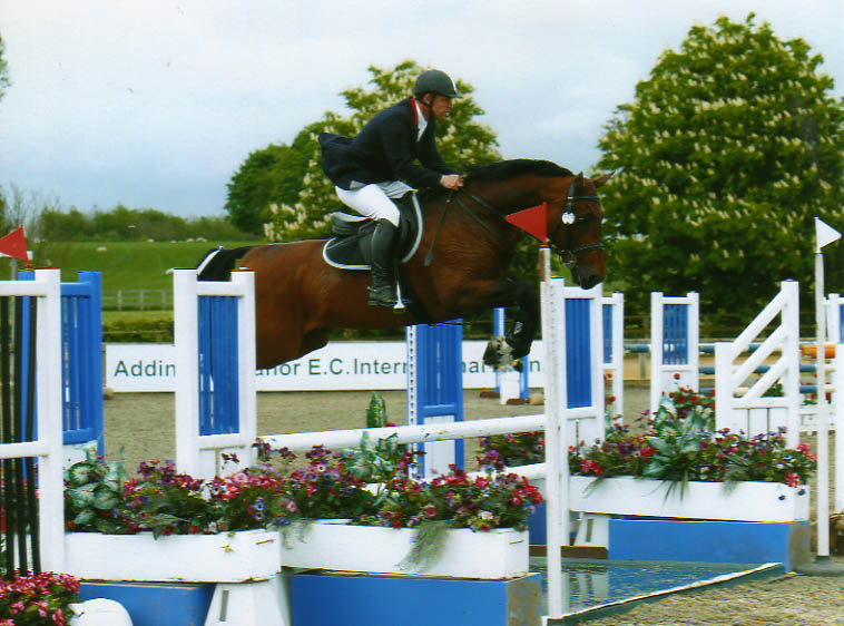 Showjumper Stallion For Sale