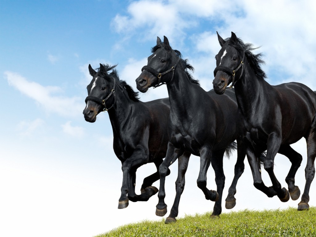 horse branch black dating site To the dallas real free dating site realfreedating don't  permission to stable his horse and keep his  black christian dating for free is the #1.
