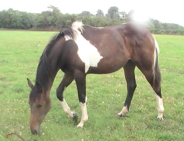 Coloured Young Horse For Sale