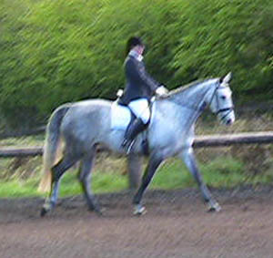 Dressage Mare - Eighteen