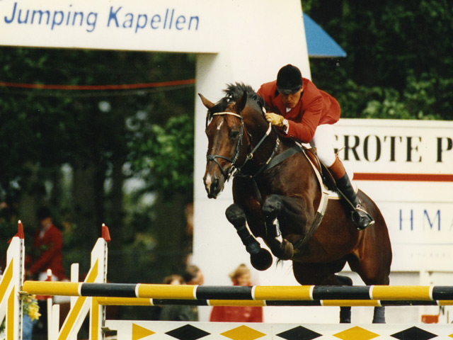 Showjumping Stallion - Darco