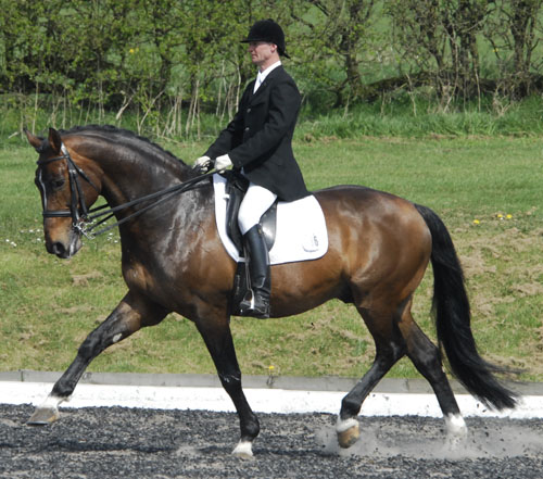 Dressage Stallions
