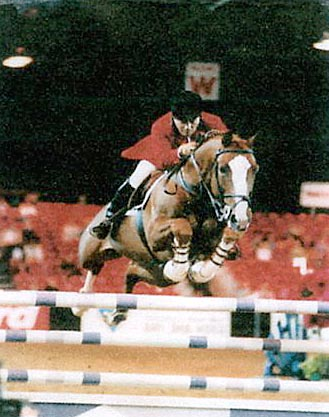 Dutch Show Jumping Stallions