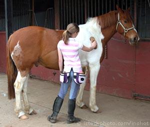 Equestrian Jobs