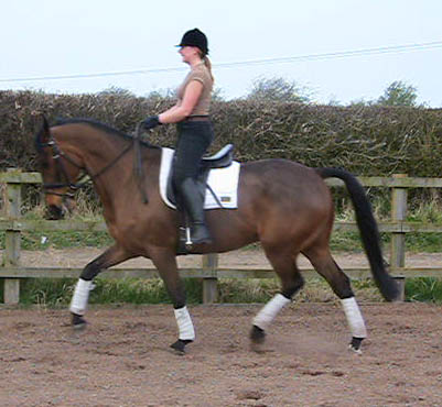 Event Horse doing Dressage