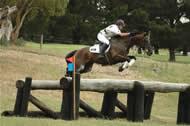 Eventing Stallions