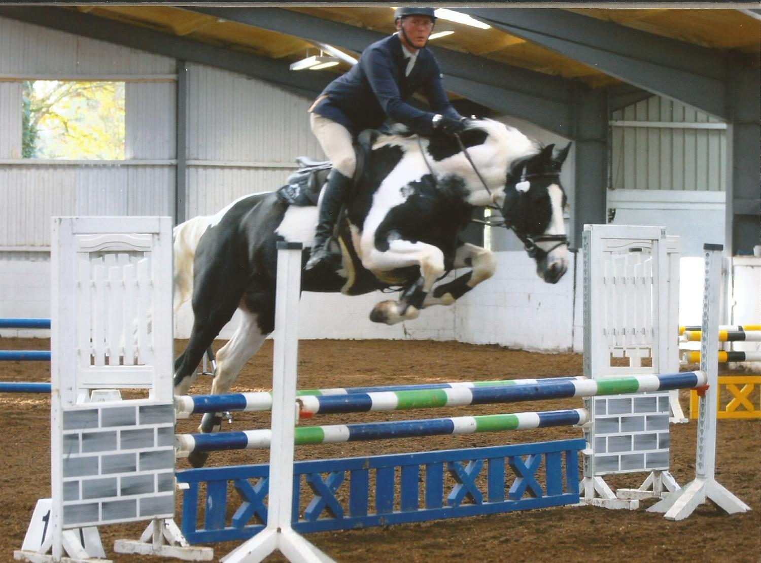 Showjumping Stallion Fernando