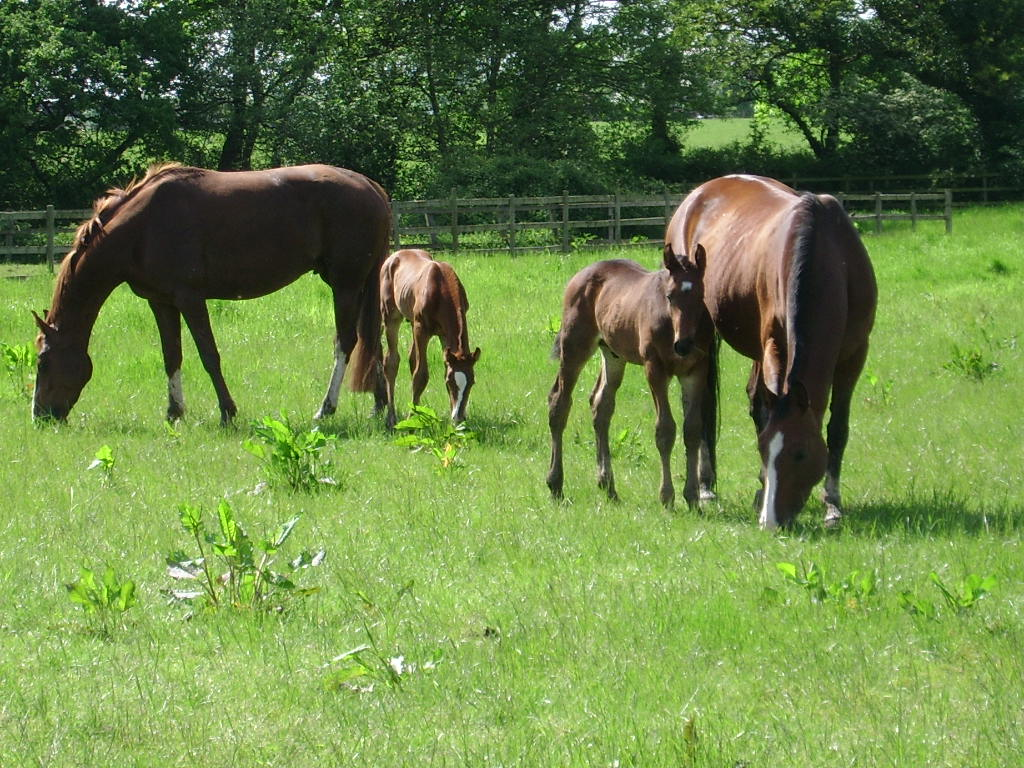 Opinions on horse breeding