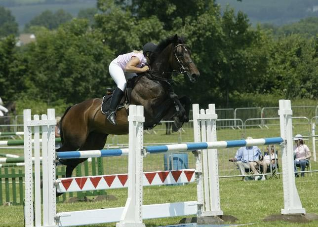 Catchas Cathch Can - Show Jumping