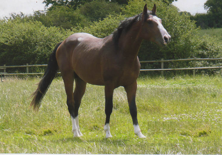 Showjumping Horse Breeding