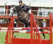 KWPN Stallions