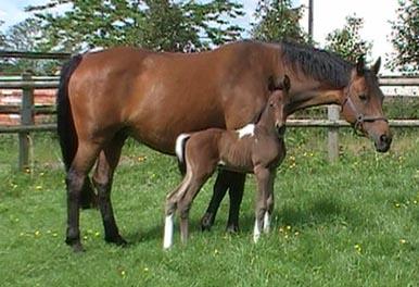 Coloured Foal