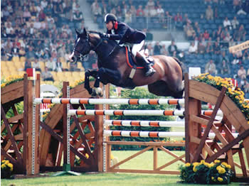 Michael Whitaker - Handel II Show Jumping Stallion