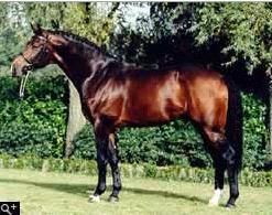 Nijinski Stallion