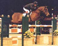 Pictures Of Horses Jumping