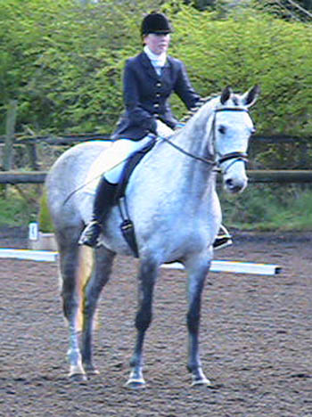 Eighteen - Dressage / Showjumper / Eventer