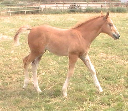 Summer as a foal