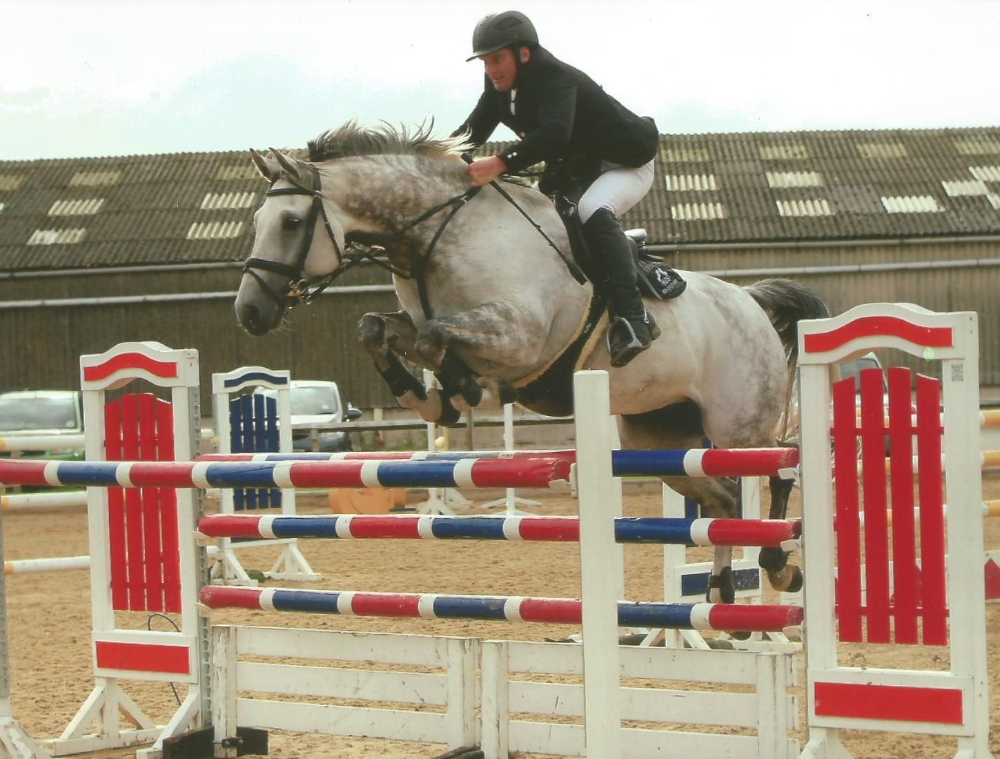 Competition Horse - Showjumper