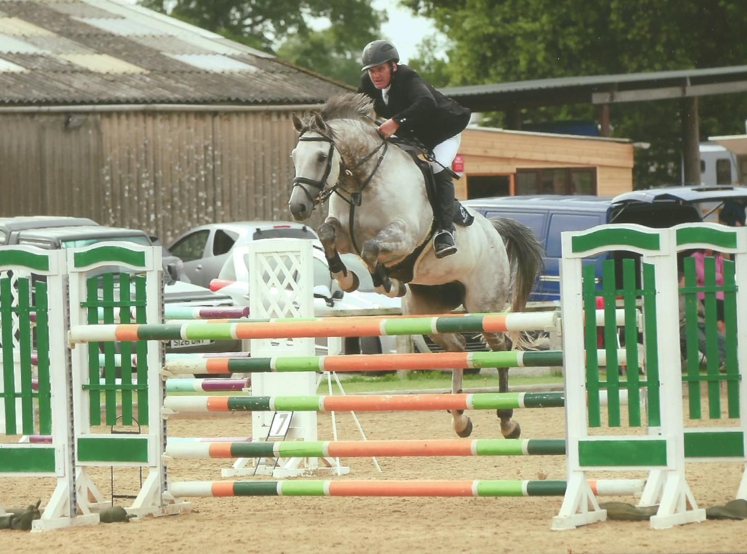Showjumping Horses