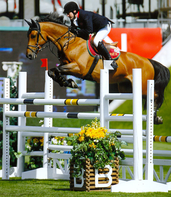 Show Jumping Horses Breeds Timo Show Jumping Horse And