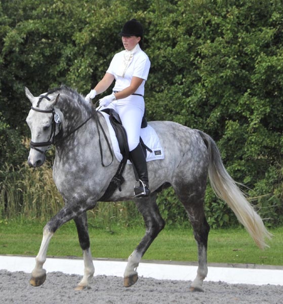Dressage Rider Samantha Morrison riding Ushi II