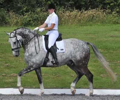 Grey Dressage Horse Ushi II