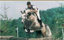 Arcus Eventing Stallion