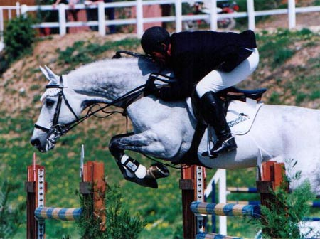 International Showjumper - Arturo 8