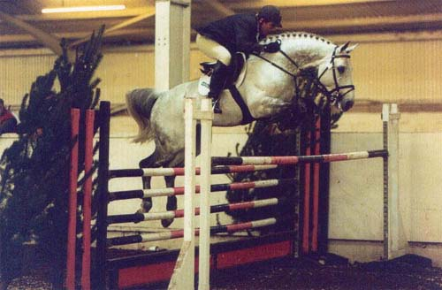 International Showjumping Horse
