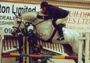 Holstein Showjumpig Stallion