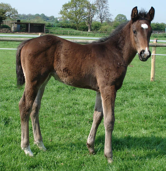 Foal For Sale