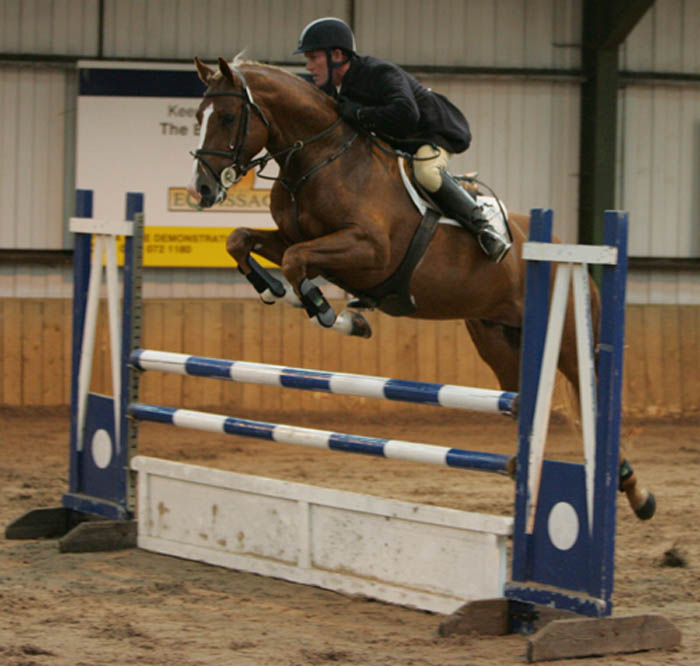 Showjumping Stallion For Sale