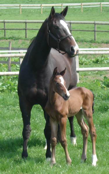 Home Bred Brood Mare