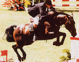 Libero H Stallion